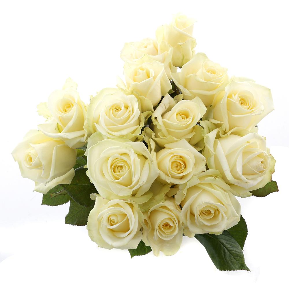 Bloemen 60cm: Roos Wit Avalanche (15 stuks)