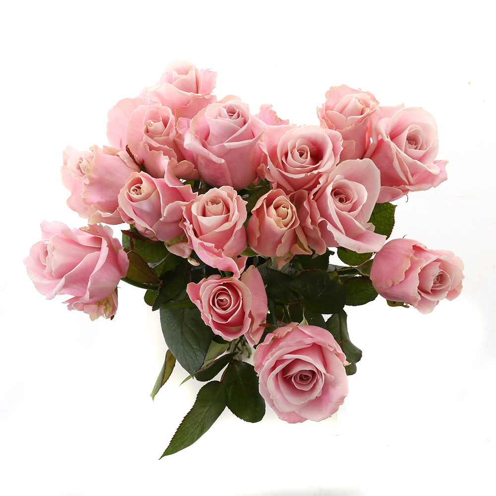 Bloemen 60cm: Roos Roze Avalanche (15 stuks)