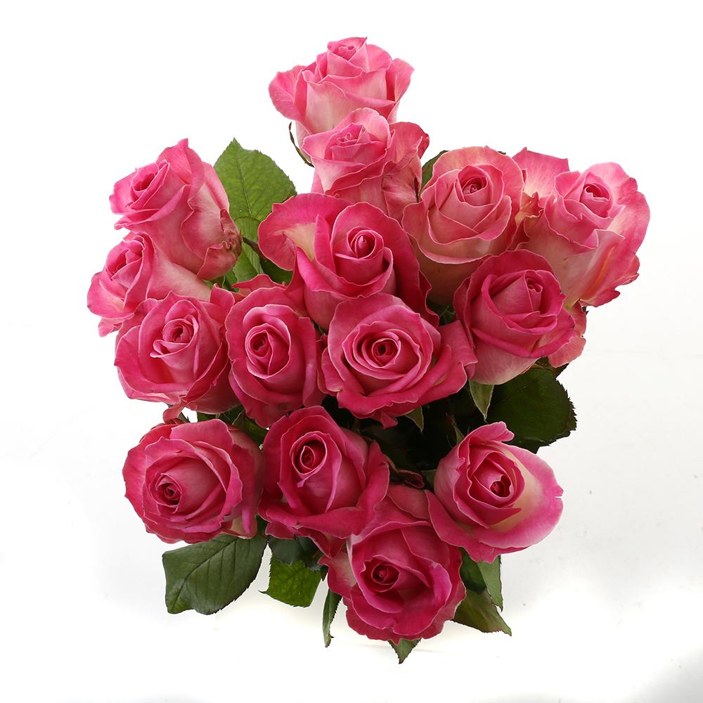 Bloemen 60cm: Roos Candy Avalanche (15 stuks)