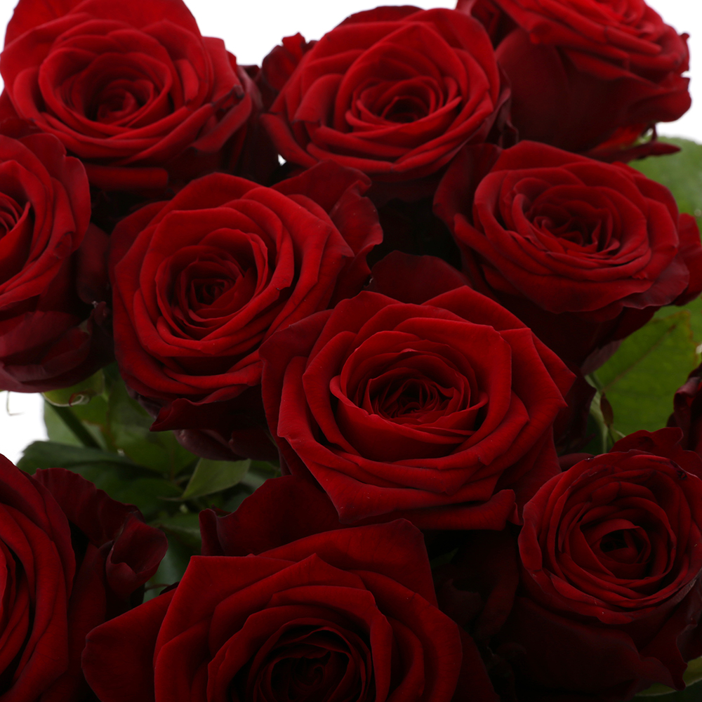 Image result for bos donkerrode rozen met lange steel