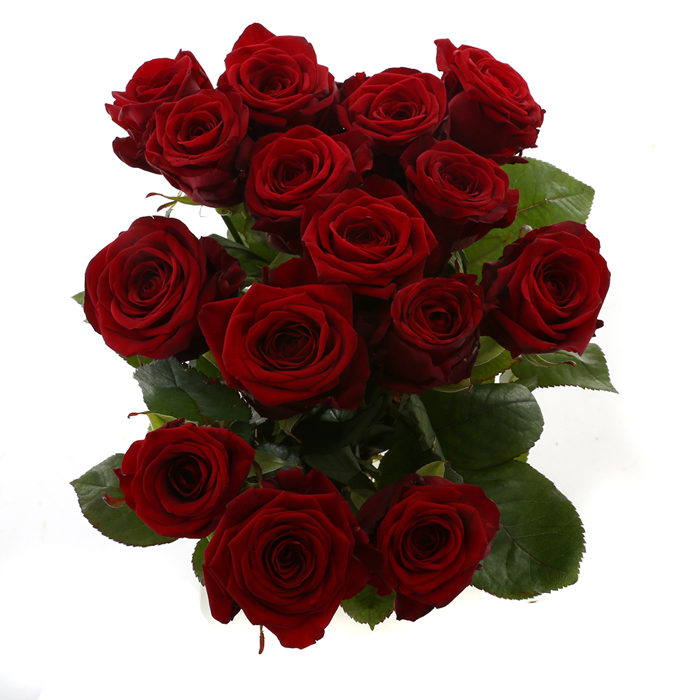 Bloemen 60cm: Roos Rood Naomi (15 stuks)