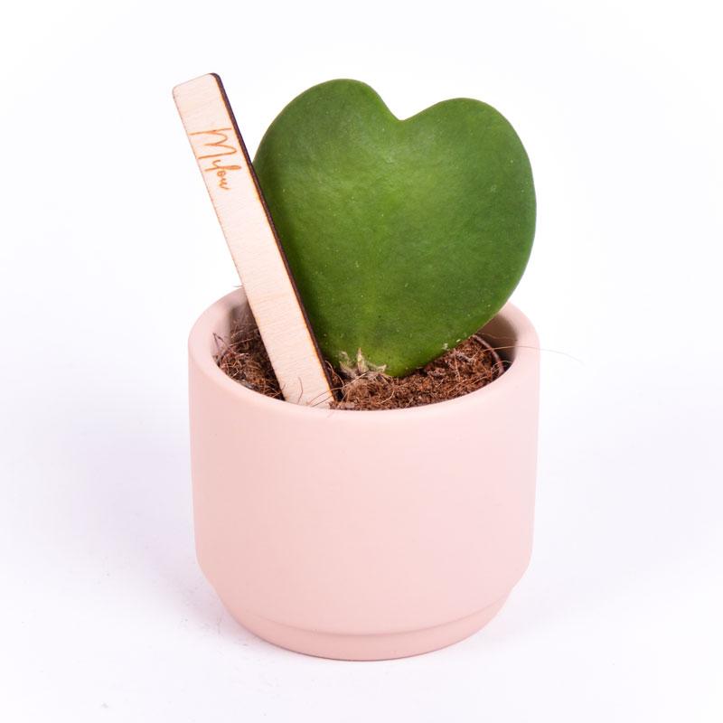 Gegraveerde plantenprikker recht incl. potje Milou