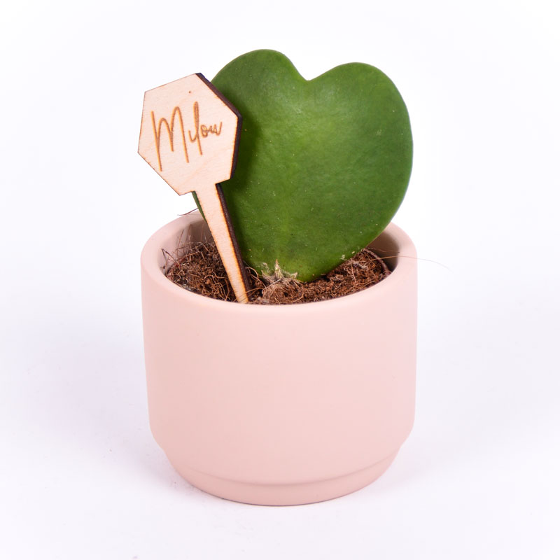 Gegraveerde plantenprikker zeshoek incl. potje Milou