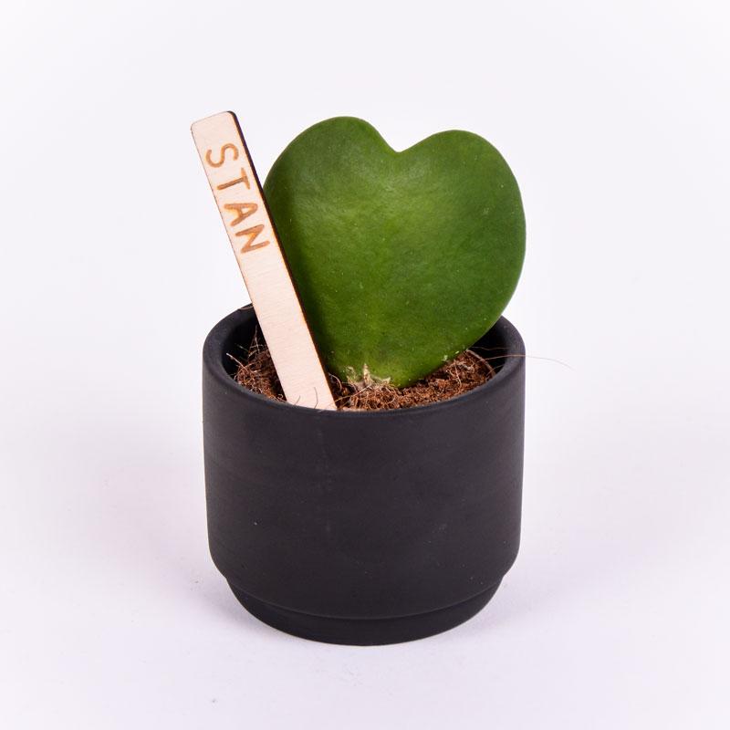 Gegraveerde plantenprikker recht incl. potje Stan