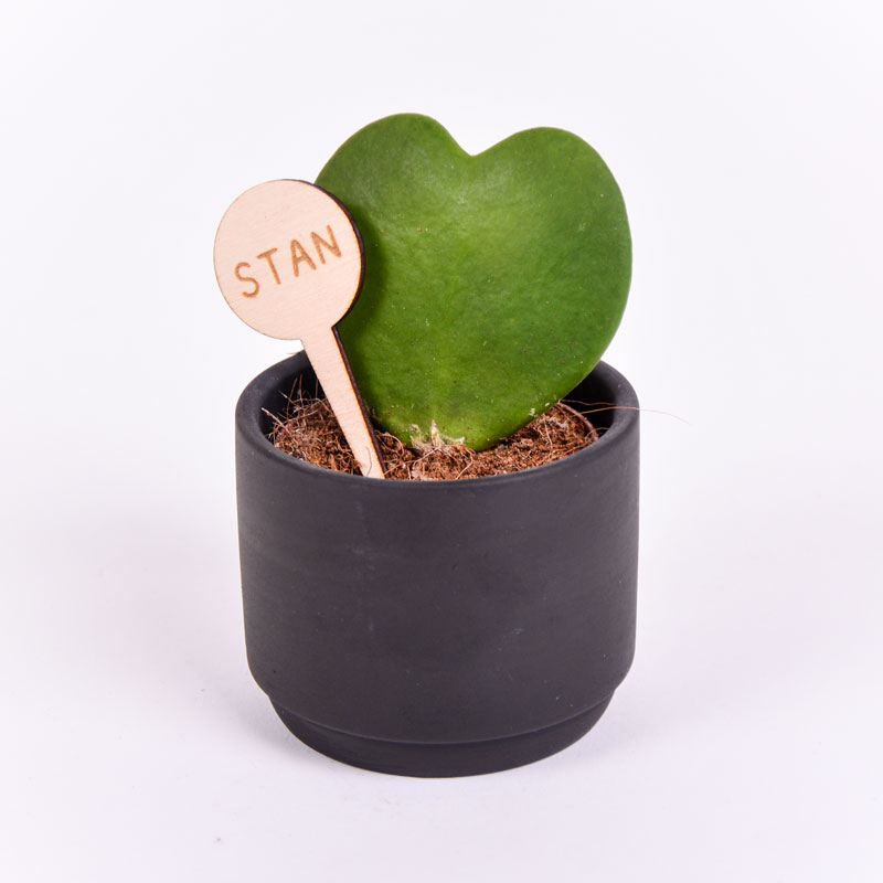 Gegraveerde plantenprikker rond incl. potje Stan