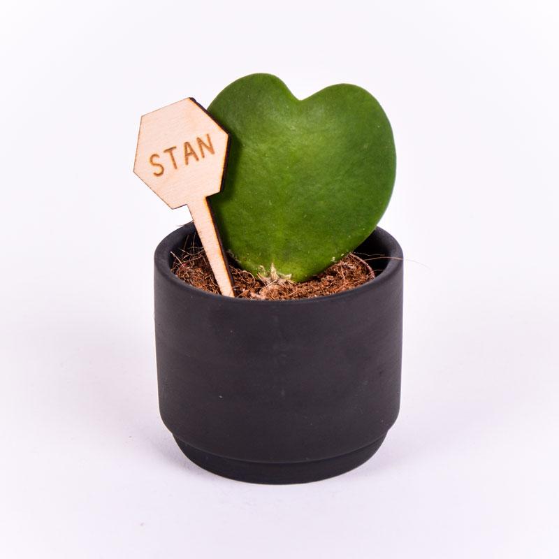 Gegraveerde plantenprikker zeshoek incl. potje Stan