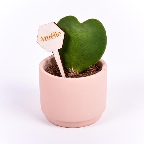 Gegraveerde plantenprikker zeshoek incl. potje Amélie