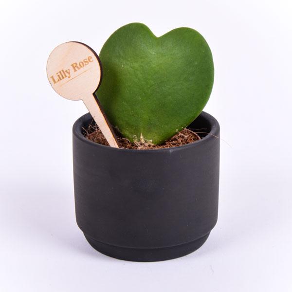 Gegraveerde plantenprikker rond incl. potje Lilly Rose