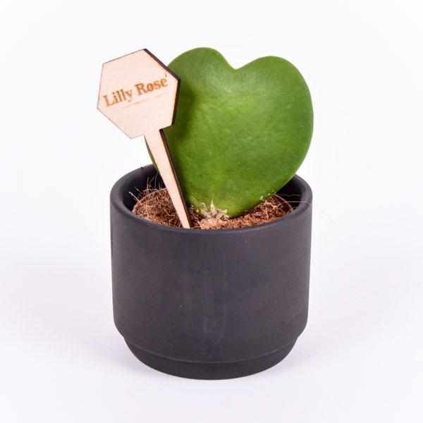 Gegraveerde plantenprikker zeshoek incl. potje Lilly Rose