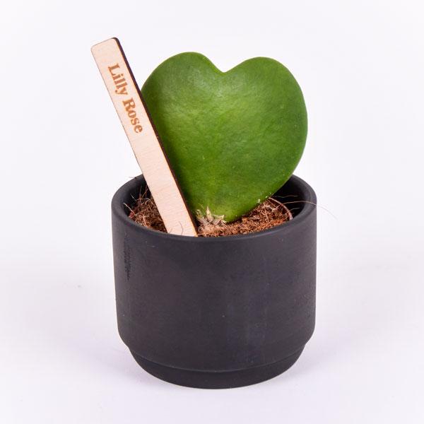 Gegraveerde plantenprikker recht incl. potje Lilly Rose