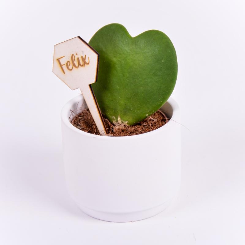 Gegraveerde plantenprikker zeshoek incl. potje Felix