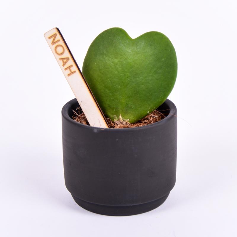 Gegraveerde plantenprikker recht incl. potje Noah