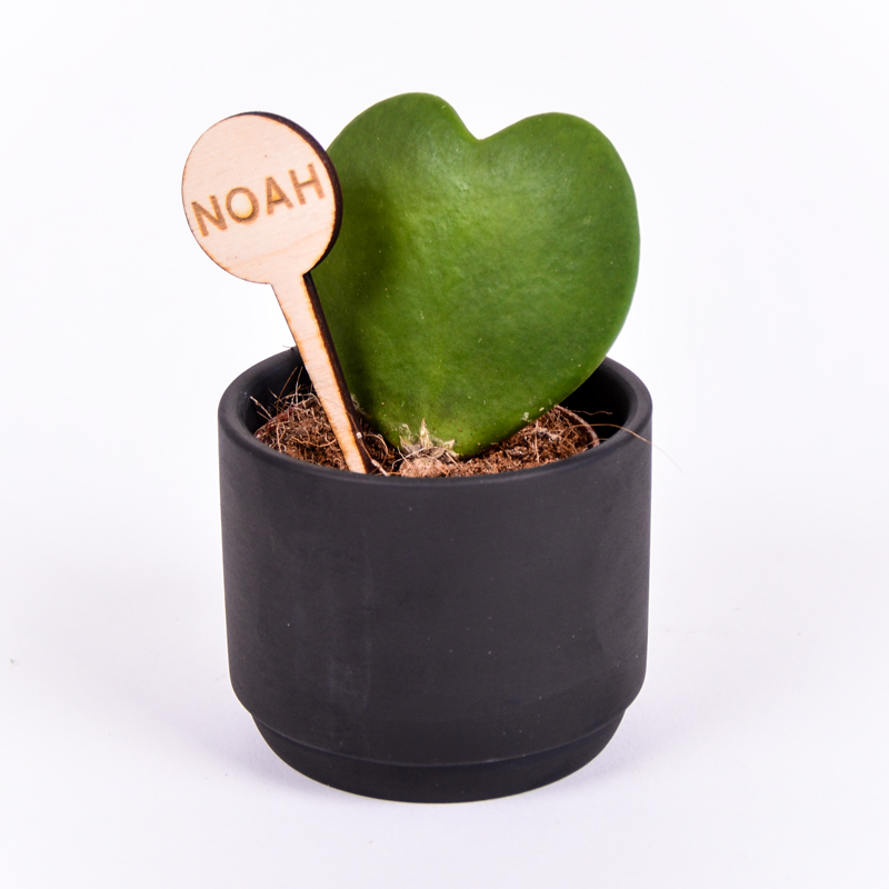 Gegraveerde plantenprikker rond incl. potje Noah