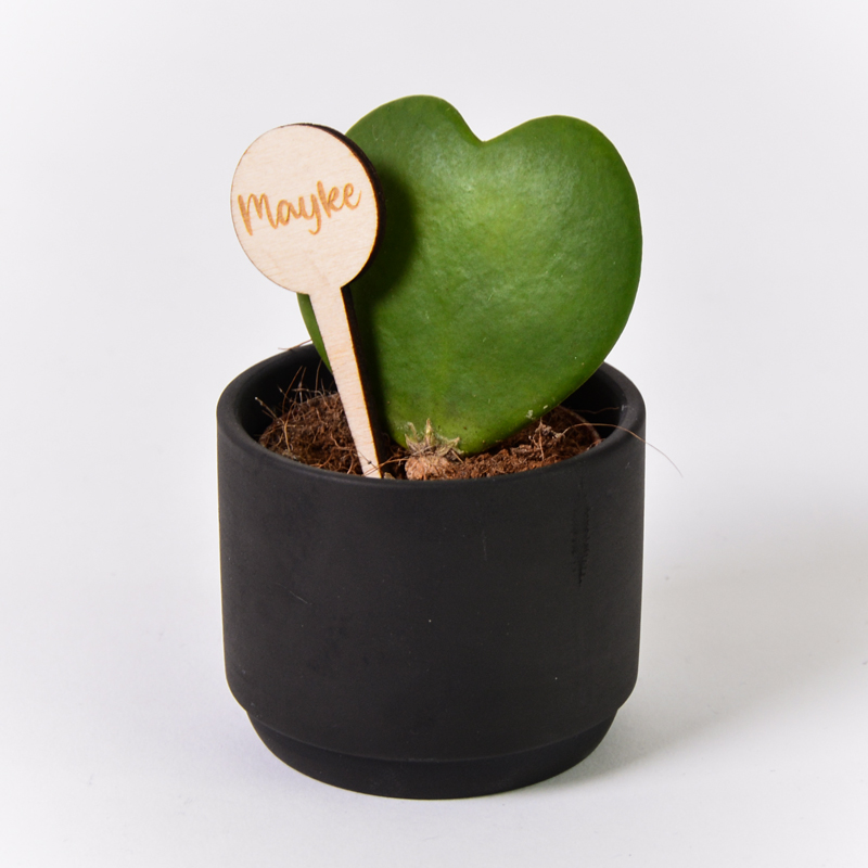 Gegraveerde plantenprikker rond incl. potje Mayke