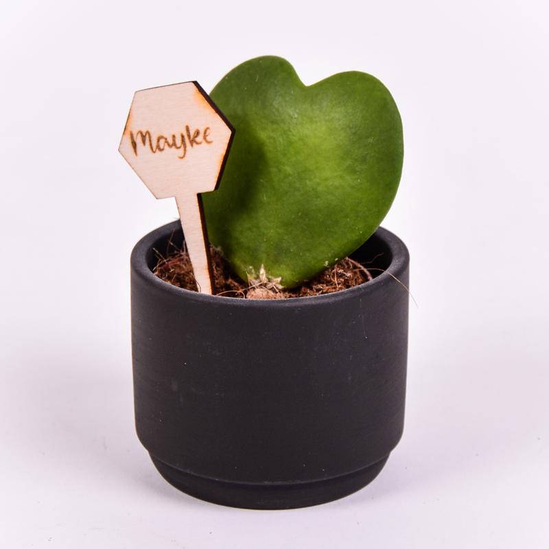Gegraveerde plantenprikker zeshoek incl. potje Mayke