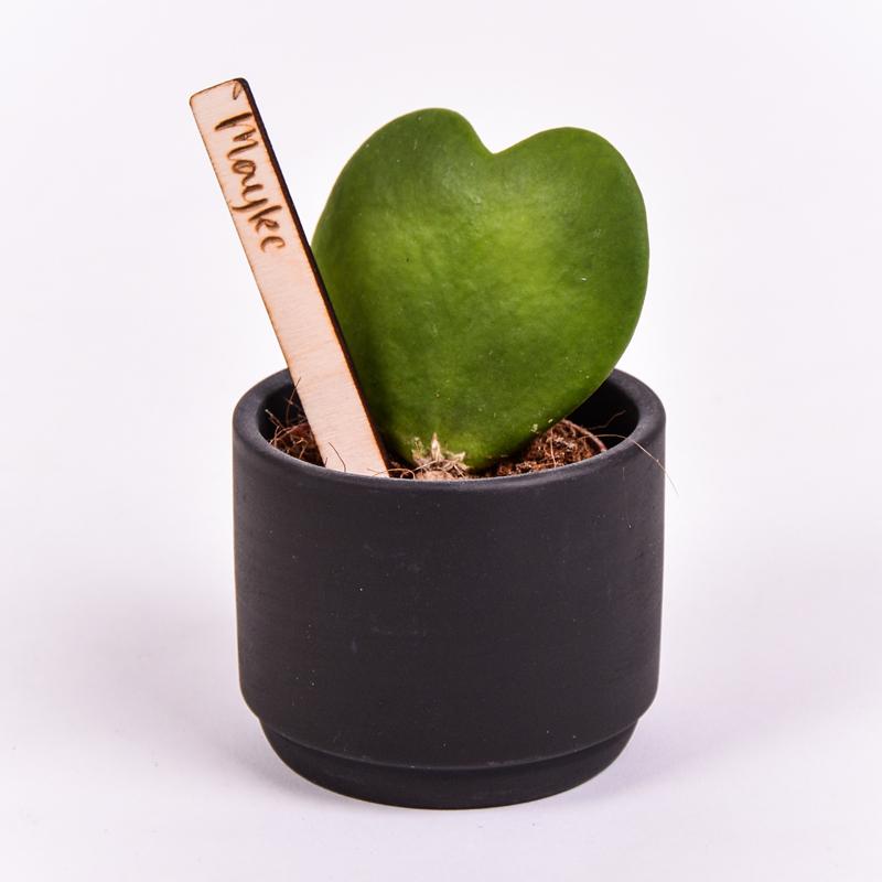 Gegraveerde plantenprikker recht incl. potje Mayke
