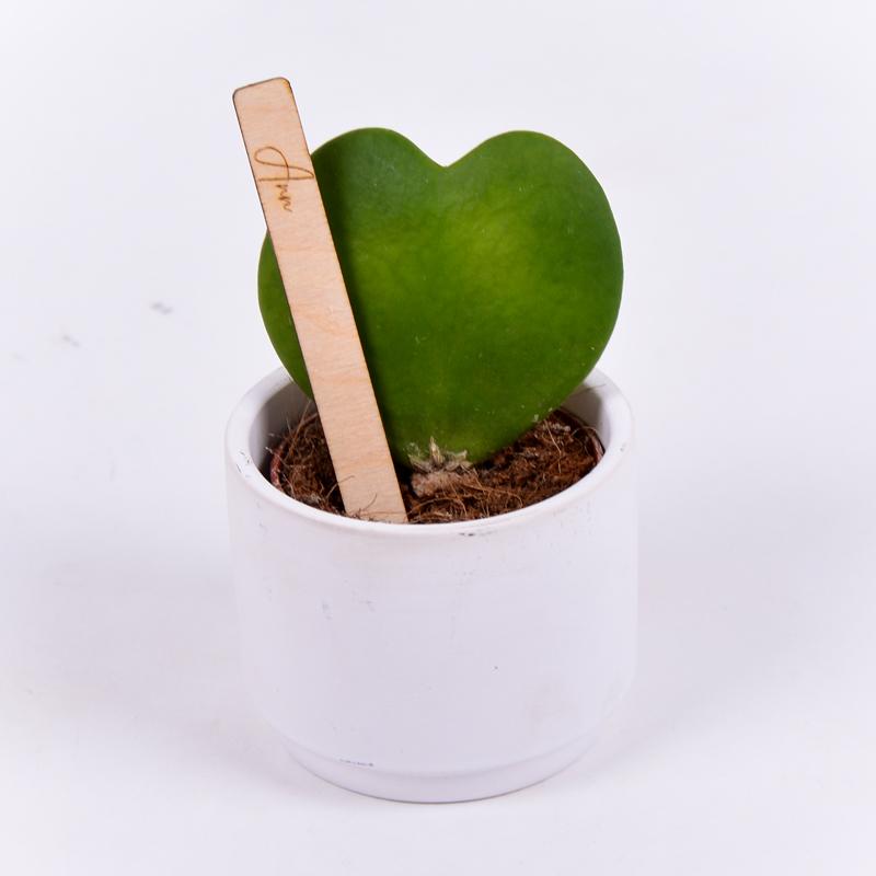 Gegraveerde plantenprikker recht incl. potje Ann