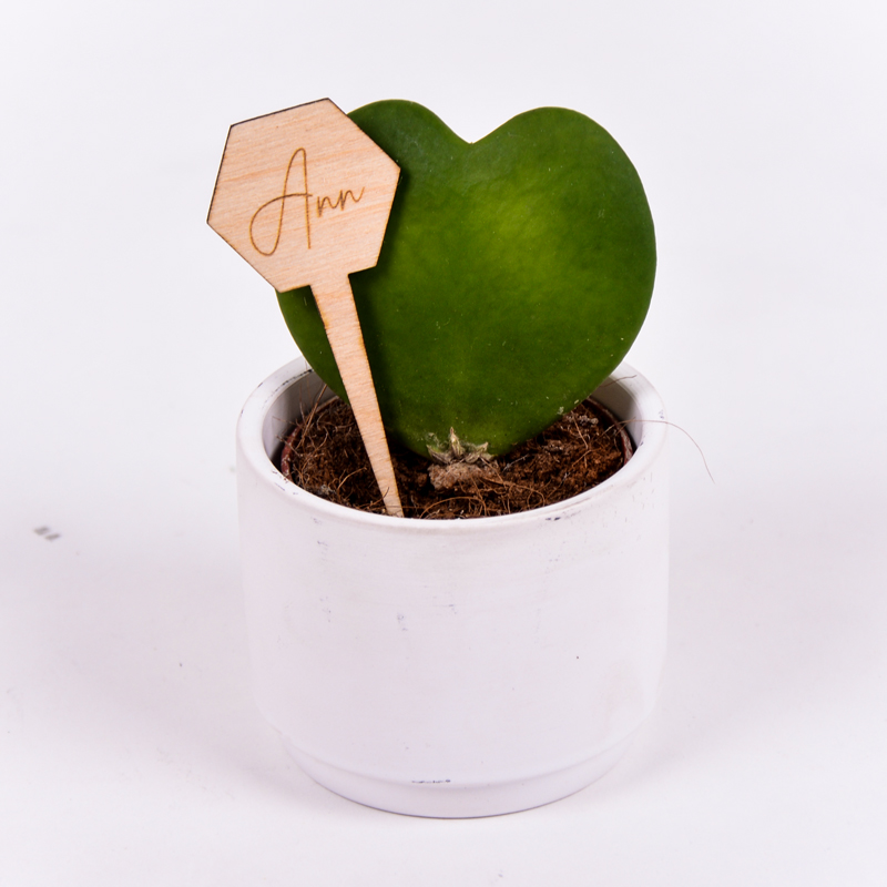 Gegraveerde plantenprikker zeshoek incl. potje Ann