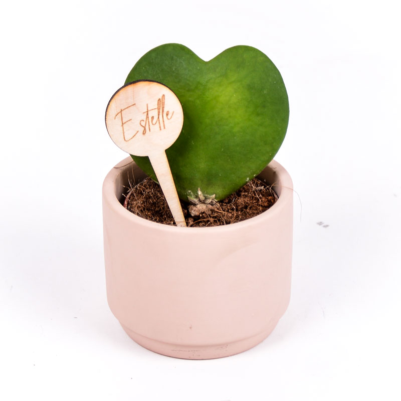 Gegraveerde plantenprikker rond incl. potje Estelle