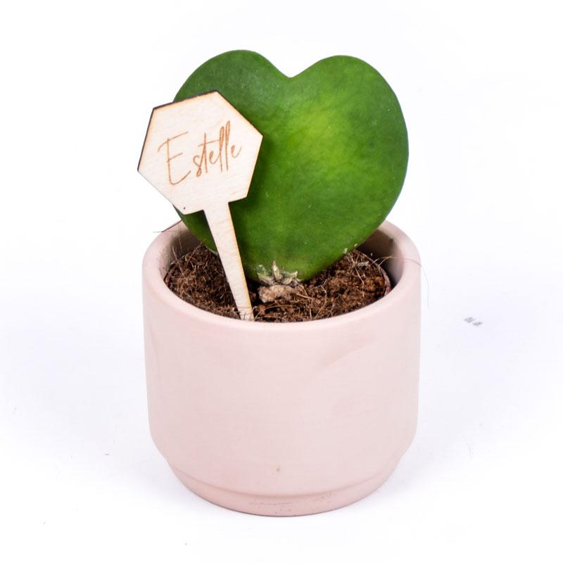 Gegraveerde plantenprikker zeshoek incl. potje Estelle