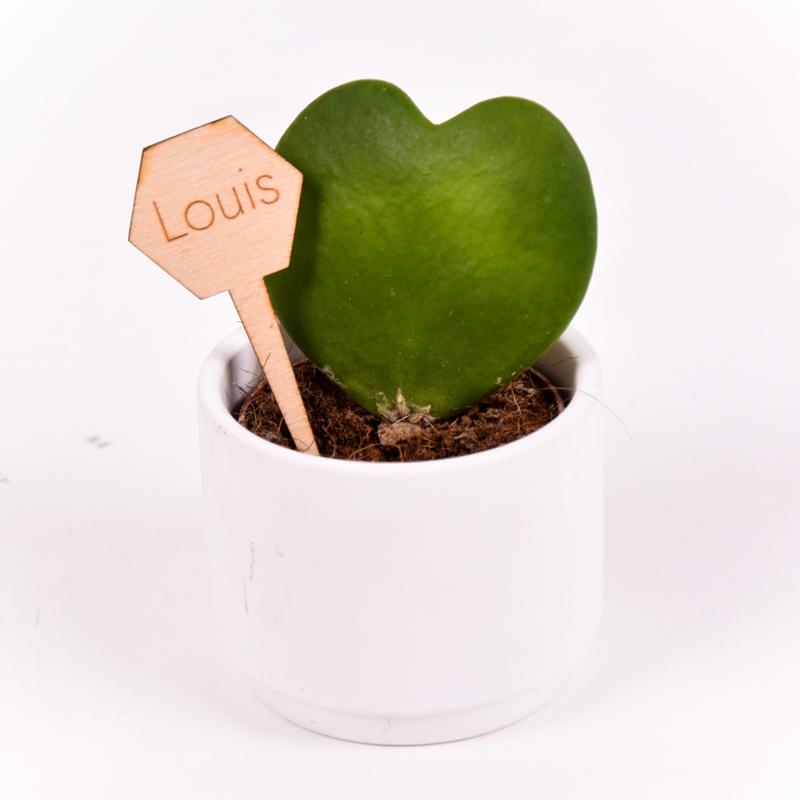 Gegraveerde plantenprikker zeshoek incl. potje Louis