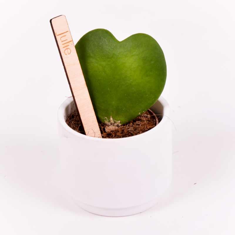Gegraveerde plantenprikker recht incl. potje Julie