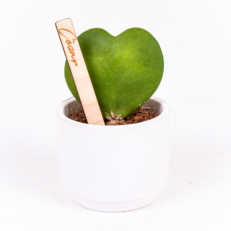 Gegraveerde plantenprikker recht incl. potje Cézar
