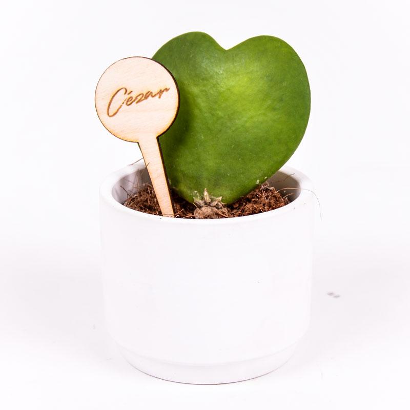 Gegraveerde plantenprikker rond incl. potje Cézar