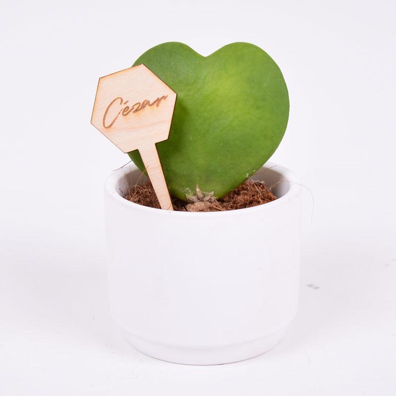 Gegraveerde plantenprikker zeshoek incl. potje Cézar