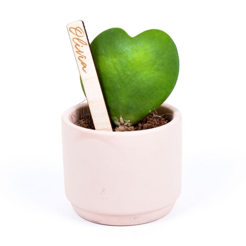 Gegraveerde plantenprikker recht incl. potje Olivia